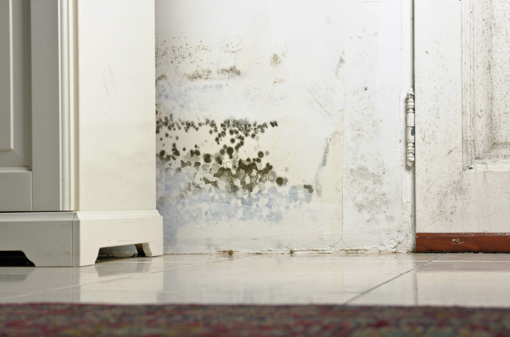 water damage restoration Raleigh, water damage repair raleigh, water damage raleigh,
